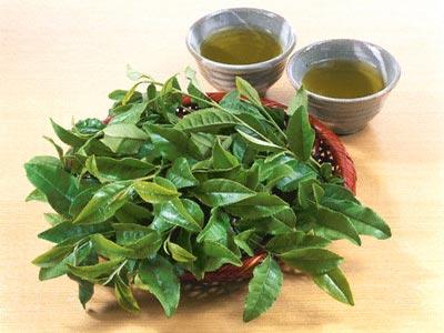 Phương pháp trị mụn bằng trà xanh