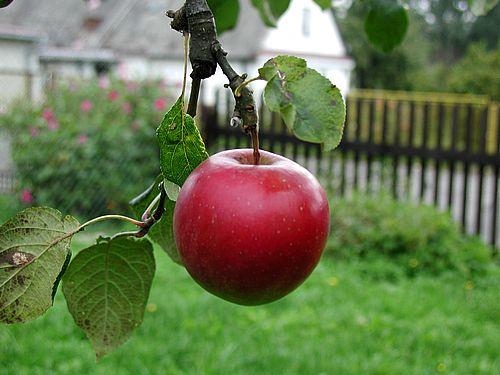 Giảm béo bụng bằng trái cây