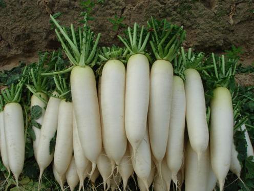 Giảm béo đùi bẳng củ cải trắng