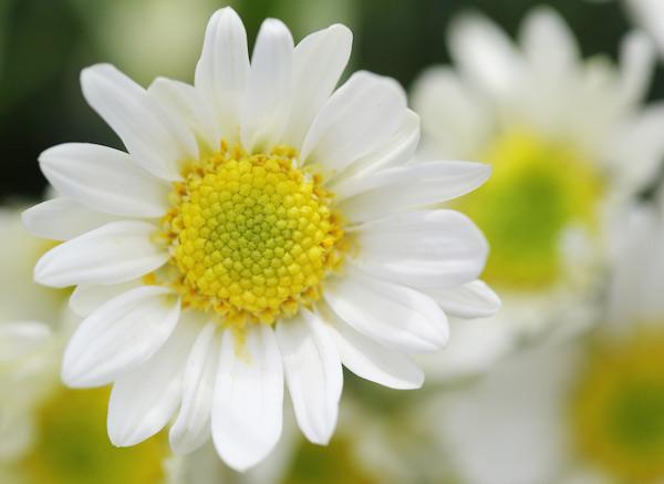 Trị nám da từ hoa