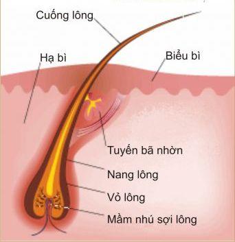 Triệt lông chân tại nhà có cho hiệu quả vĩnh viễn?